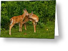 Sibling Love Greeting Card