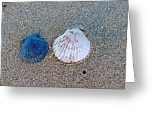 Side By Side Shells Greeting Card