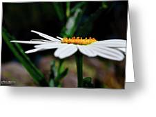 Side Of A Daisy Greeting Card