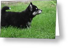 Side View Of A Two Month Old Alusky Pup Greeting Card