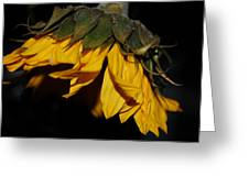 Sideview Sunflower Greeting Card
