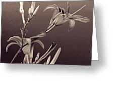 Sidewalk Lilies Sepia Square Format  Greeting Card