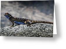 Sierra Fence Lizard 2 - Sierra Greeting Card