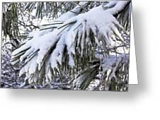 Sierra Winter Greeting Card