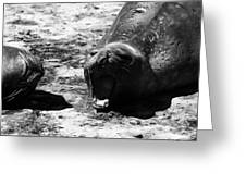 Siesta At Valdez Peninsula Greeting Card
