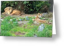 Siesta Time Greeting Card by Suzanne Gaff
