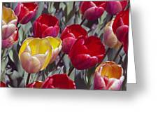 Signs Of Sping  Greeting Card
