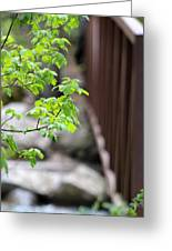 Signs Of Spring In American Fork Canyon Utah Greeting Card