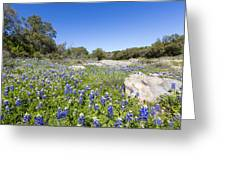 Signs Of Spring In Texas Greeting Card