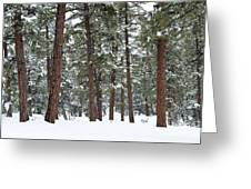 Silence Of The Woods Greeting Card