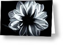 Silent Beauty  Greeting Card