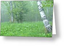 Silent Birch Greeting Card