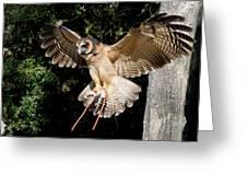 Silent Flight Greeting Card
