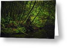 Silent Forest Greeting Card by Stuart Deacon