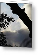 Silhouette Against The Sky Greeting Card