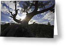 Silhouette Of A Gnarled Tree Greeting Card
