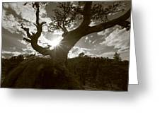Silhouette Of A Gnarled Tree - Sepia Greeting Card