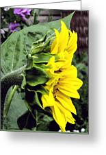 Silhouette Of A Sunflower Greeting Card