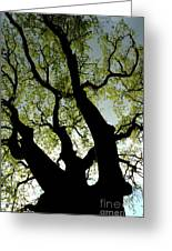 Silhouette Of A Tree Trunk With New Growth In Springtime Greeting Card