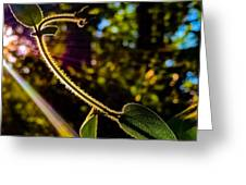 Silhouette Of Climbing Vine On A Sunny Afternoon Greeting Card