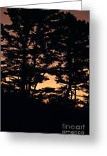 Silhouette Of Forest  Greeting Card
