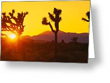 Silhouette Of Joshua Trees Yucca Greeting Card