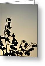 Silhouette Of Lilies Of The Valley 2 Greeting Card