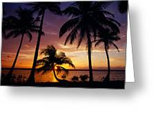 Silhouette Of Palm Tree On The Coast Greeting Card