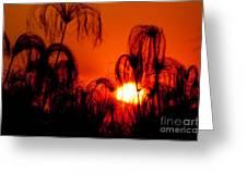 Silhouette Of Papyrus At Sunset Greeting Card