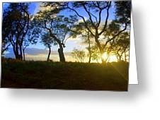 Silhouette Of Trees Greeting Card