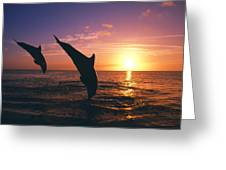 Silhouette Of Two Bottlenose Dolphins Greeting Card