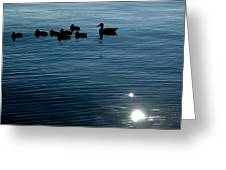 Silhouetted Duck Family Swims Greeting Card by Todd Gipstein