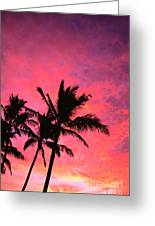Silhouetted Palms Greeting Card