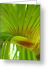 Silk Floss Palm Greeting Card