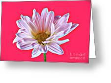 Silky 12618-8 Greeting Card