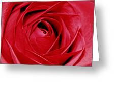 Silky Petals Greeting Card