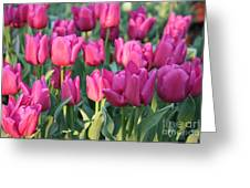 Silky Pink Tulips Greeting Card