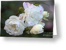 Silky Rose 2 Greeting Card