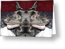 Silly Dog Greeting Card