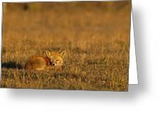 Silly Fox Greeting Card