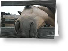 Silly Horse Greeting Card