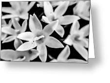 Silver Bells Greeting Card