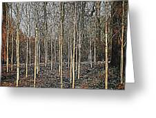 Silver Birch Winter Garden Greeting Card