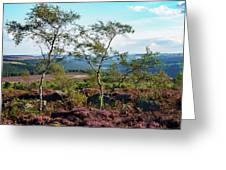 Silver Birch At Surprise View Greeting Card
