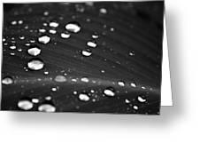 Silver Drops Greeting Card