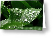 Silver Drops Of Spring Greeting Card