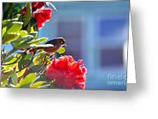 Silver Eye Greeting Card