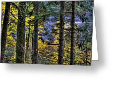 Silver Falls State Park Oregon 2 Greeting Card