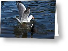 Silver Gull And Australian Coot Greeting Card