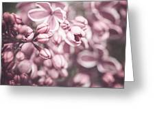 Silver Lilacs Greeting Card